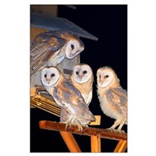 Four Owlets Large Poster