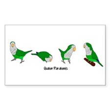 Quaker Parakeets Rectangle Decal