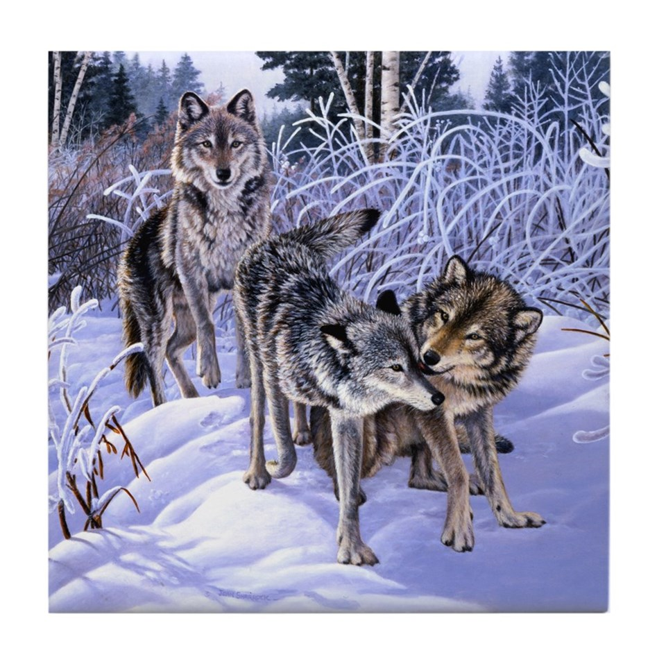 wolves playing tile coaster $ 7 50 qty availability product number