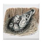 Nesting Pigeons Tile Coaster