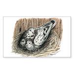 Nesting Pigeons Sticker (Rectangle)