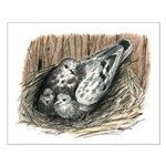 Nesting Pigeons Small Poster