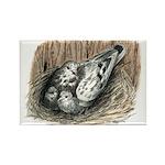 Nesting Pigeons Rectangle Magnet