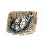 Nesting Pigeons Postcards (Package of 8)