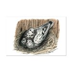 Nesting Pigeons Mini Poster Print