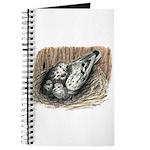 Nesting Pigeons Journal