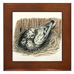 Nesting Pigeons Framed Tile