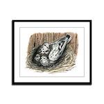 Nesting Pigeons Framed Panel Print