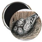 Nesting Pigeons 2.25
