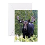 Bull Moose Greeting Cards (Pk of 10)