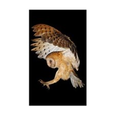 Molly Flying In Sticker (Rectangle 50 pk)