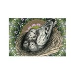 Nesting Pigeons Decorative Rectangle Magnet (100 p