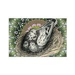 Nesting Pigeons Decorative Rectangle Magnet