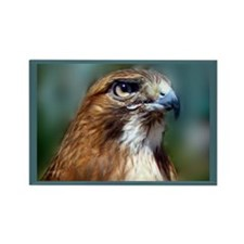 Redtail Hawk Rectangle Magnet