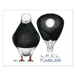 Tumbler Baldhead Pigeon Small Poster
