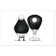 Tumbler Baldhead Pigeon Posters