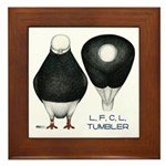Tumbler Baldhead Pigeon Framed Tile
