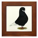 Tumbler Beard Pigeon Framed Tile
