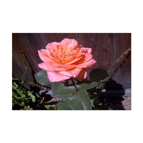 Peach Rose Mini Poster Print