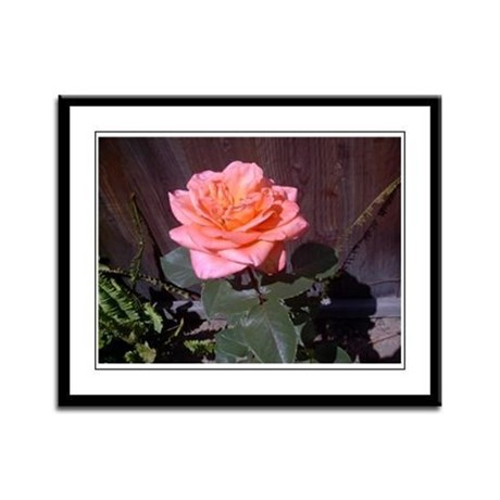Peach Rose Framed Panel Print
