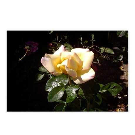 Yellow Rosebud Postcards (Package of 8)