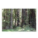 Forest Hendy State Park California Postcards (Pack