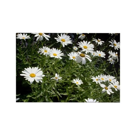 Cheerful Daisies Rectangle Magnet