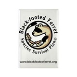 Funny Black footed ferret Rectangle Magnet (100 pack)