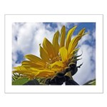 Sunflowers and Sky Small Poster