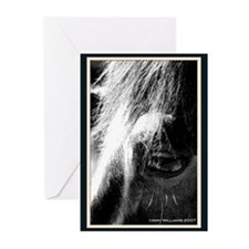 Horse's Eye Greeting Cards (Pk of 20)