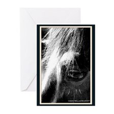 Horse's Eye Greeting Cards (Pk of 10)