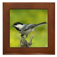 Bird Photo Framed Tile