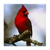 Cardinal Bird Photo Tile Coaster