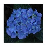 Blue Hydrangea Flower Photo Tile Coaster