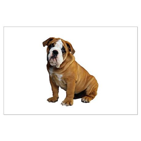English Bulldog Large Poster