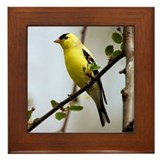 American Goldfinch Bird Photo Framed Tile