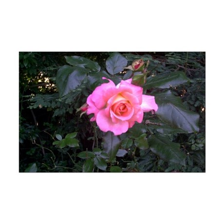 Rose in the Redwoods Mini Poster Print