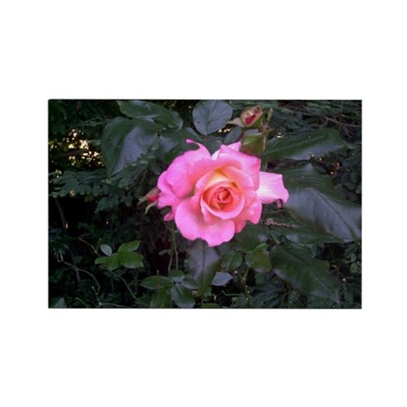 Rose in the Redwoods Rectangle Magnet