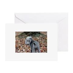 Weimaraner Puppy Greeting Cards