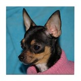 Cool Chihuahua puppy Tile Coaster