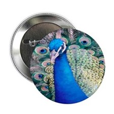 Peacock series 1 Button