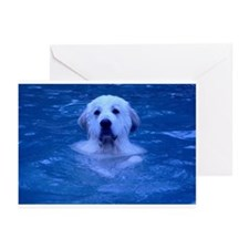 Lulu Greeting Cards (Pk of 10)