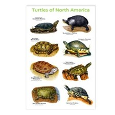 Turtles of North America Postcards (Package of 8)