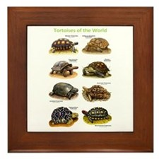 Tortoises of the World Framed Tile