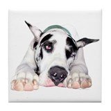 Great Dane Shy Harlequin Tile Coaster