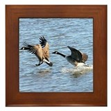 Waterfowl Framed Tile