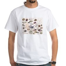 Funny Seashell Shirt