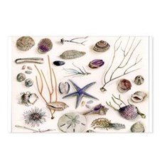 Unique Seashells Postcards (Package of 8)
