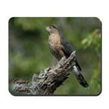 Cooper's Hawk Mousepad