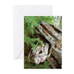 Old Wood Greeting Cards (Pk of 10)